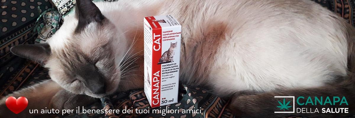 04 – Gatto Bubu 1 3 Cuoricino