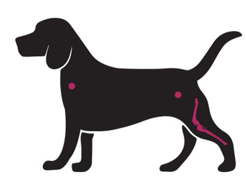 benessere del cane, canapa della salute, CBD